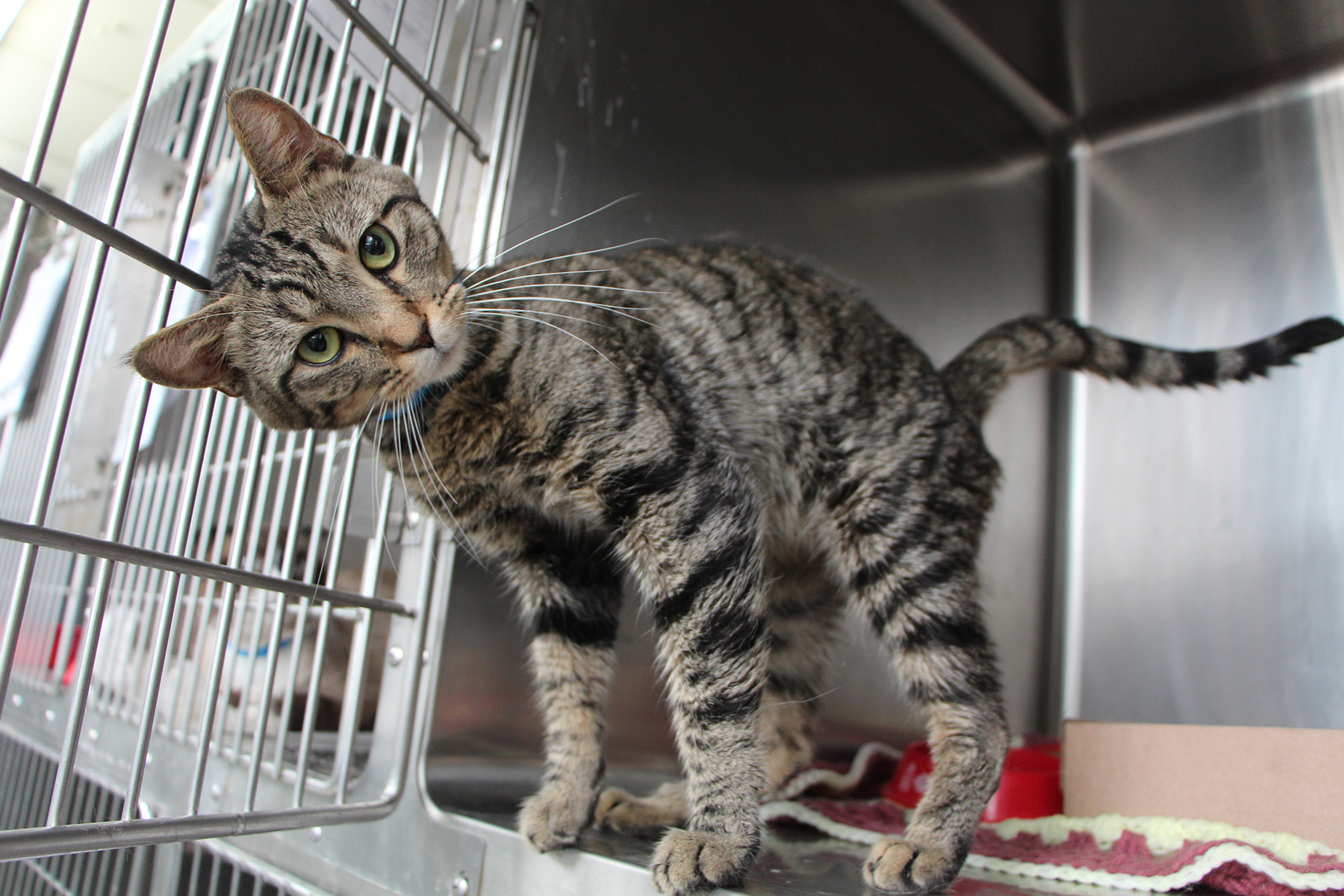 The Lawrence Humane Society provides shelter and care to animals in need.